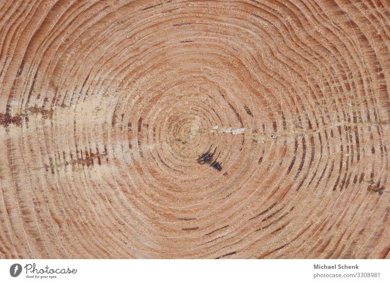 Baumstamm mit seinen jahresringen Landwirtschaft Forstwirtschaft Säge Axt Natur Landschaft Wald Holz braun Kraft Blattadern Lebensringe Farbfoto Außenaufnahme