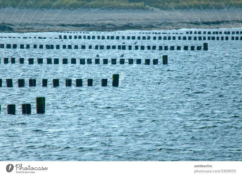 Küstenschutz Ferien & Urlaub & Reisen Wasser Landschaft Meer Strand Textfreiraum Wellen Insel Ostsee Dorf Rügen Mecklenburg-Vorpommern Holzpfahl Fischerdorf Kap