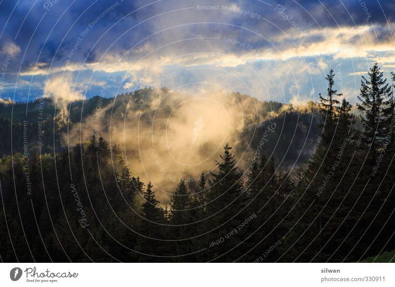 nebulöser Napf blau Landschaft ruhig dunkel kalt Horizont Nebel wandern bedrohlich geheimnisvoll gruselig Tanne Endzeitstimmung Nebelschleier