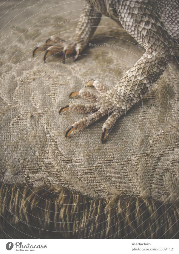 Bartagamen Schuppen Krallen Dinosaurier Reptil Bart-Agame Echsen Echte Eidechsen laufen Farbfoto Gedeckte Farben Innenaufnahme Muster Strukturen & Formen