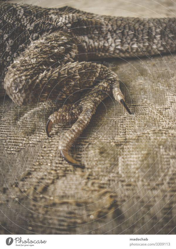 Bartagamen Schuppen Krallen Bart-Agame Dinosaurier Reptil Echte Eidechsen Echsen sitzen Farbfoto Gedeckte Farben Innenaufnahme abstrakt Muster