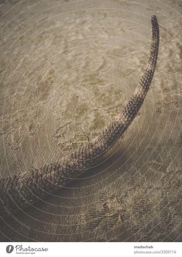 Bartagamen Tier ästhetisch Perspektive exotisch bizarr Schwanz Schuppen Echsen Echte Eidechsen Dinosaurier Bart-Agame
