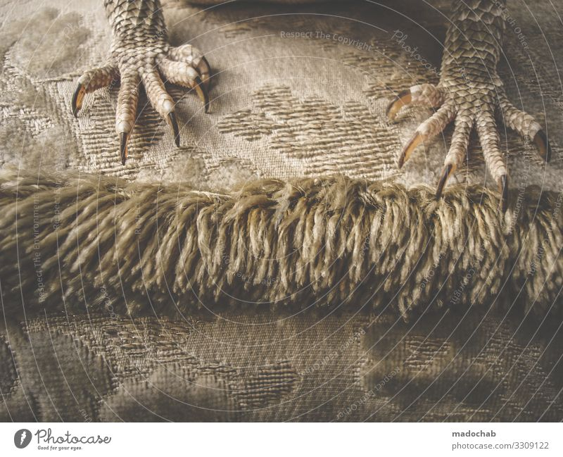 Bartagamen Schuppen Krallen Dinosaurier Echsen Echte Eidechsen Reptil Bart-Agame sitzen Farbfoto Gedeckte Farben Innenaufnahme Muster Strukturen & Formen