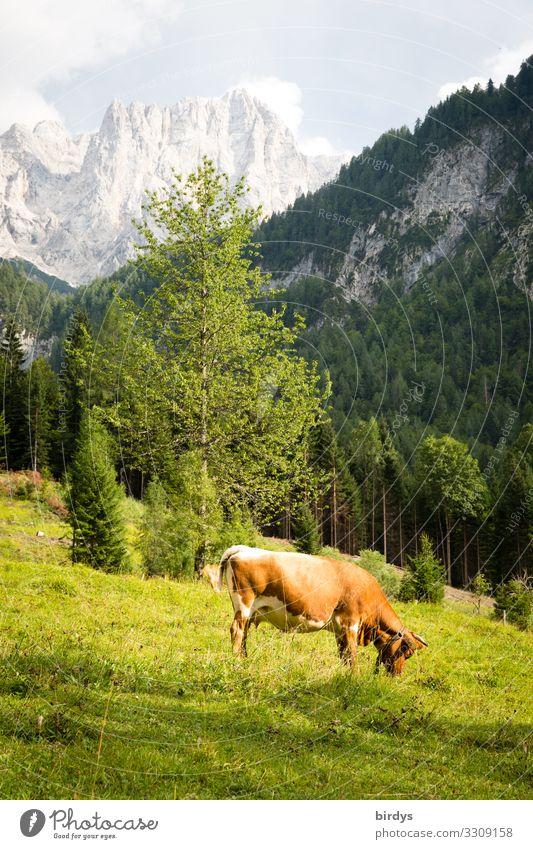 Alpenidyll in Slowenien Ferien & Urlaub & Reisen Sommerurlaub wandern Landwirtschaft Forstwirtschaft Natur Himmel Wolken Sonnenlicht Schönes Wetter Baum Wiese