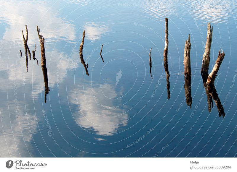 Moorsee mit abgestorbenen Ästen und Spiegelung von Himmel und Wolken Umwelt Natur Wasser Frühling Schönes Wetter Baumstumpf Sumpf alt stehen authentisch