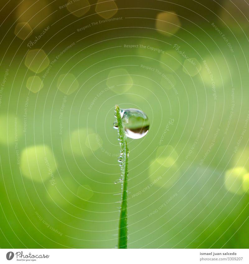 Regentropfen auf dem grünen Gras in der Natur, Regentage und grüner Hintergrund Pflanze Blatt Blätter Tropfen regnerisch Wasser nass glänzend hell Garten