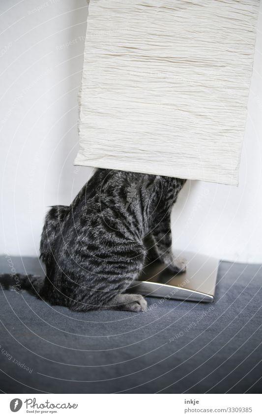 Verstecken für Anfänger Katze Tier Tierjunges lustig authentisch Innerhalb (Position) Haustier verstecken hocken Unsinn Lampenschirm Tigerfellmuster deplatziert