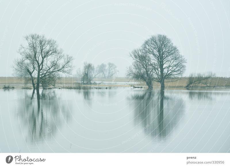Odertal Umwelt Natur Landschaft Pflanze Wasser Himmel Winter Baum blau schwarz Polder Reflexion & Spiegelung Farbfoto Außenaufnahme Menschenleer