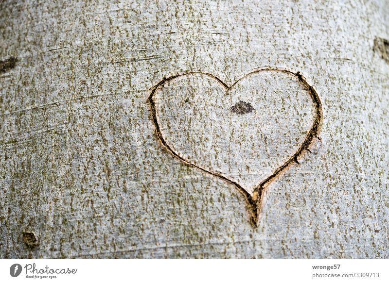Ein Herz in die Rinde eines Baumes geschnitten Holz Zeichen Glück Lebensfreude Frühlingsgefühle Begeisterung Liebe herzförmig Baumstamm Baumrinde
