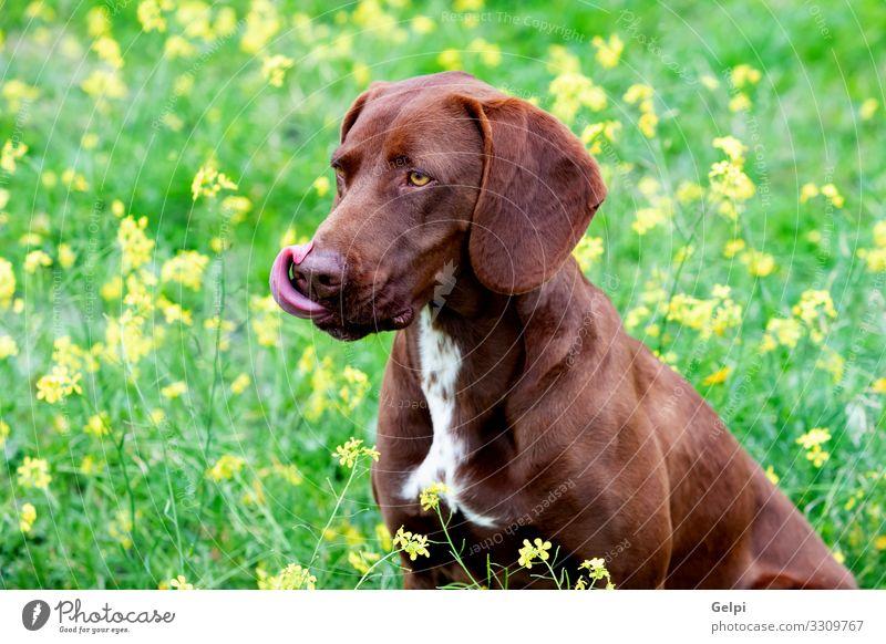 Hund weiß Blume Tier Wiese klein braun groß Fotografie rein Haustier Säugetier ernst züchten heimisch Pelzmantel