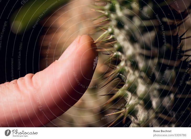 Kaktusliebe Mensch grün braun maskulin Finger berühren nah Daumen stachelig Intimität Lücke Stachel