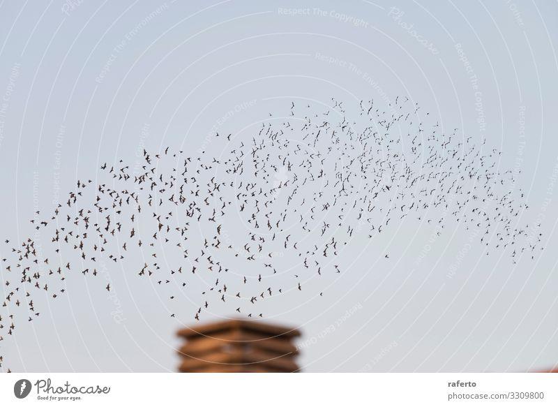 Vögel fliegen im Zug über einen Schornstein Sonne Fabrik Industrie Umwelt Natur Landschaft Tier Himmel Skyline Gebäude Wildtier Vogel dreckig retro braun Ende