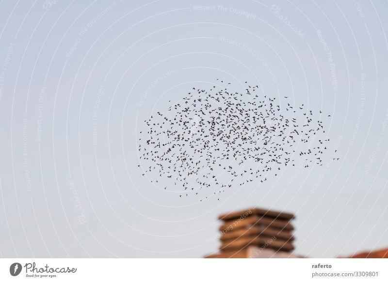 Vögel fliegen im Zug über einen Schornstein Sonne Fabrik Industrie Umwelt Natur Landschaft Tier Himmel Skyline Gebäude Vogel dreckig retro braun Ende