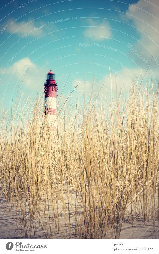 Aus Landschaft Himmel Wolken Sommer Hügel Insel Amrum Düne Dünengras Leuchtturm alt groß hoch blau braun gelb rot weiß Ferien & Urlaub & Reisen Farbfoto