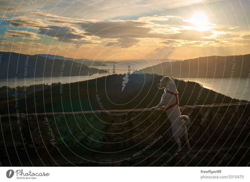 Himmel Ferien & Urlaub & Reisen Natur Hund Sommer blau schön grün Landschaft Sonne Meer Wolken Tier Strand Berge u. Gebirge Straße