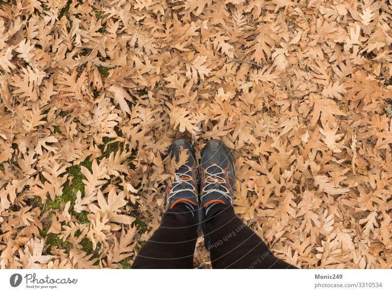 Menschliche Füße, die auf trockenes Herbstlaub treten schön Garten Fuß Natur Pflanze Baum Blatt Park Wald Schuhe hell natürlich weich braun gelb gold rot weiß