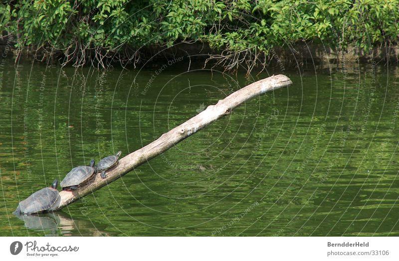 Familienausflug Erholung See Klettern Ast Zoo steigen Schildkröte