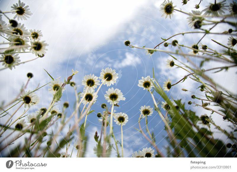 Blumenwiese schön Sommer Sonne Dekoration & Verzierung Natur Pflanze Schönes Wetter Gras Blatt Blüte Wildpflanze Wiese leuchten gelb rot weiß Blumenfeld