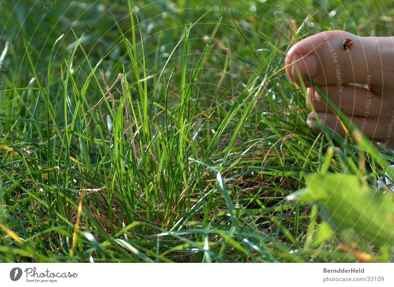 Fuss im Gras mit Käfer Natur Blatt Gras Fuß Käfer Zehen Marienkäfer krabbeln