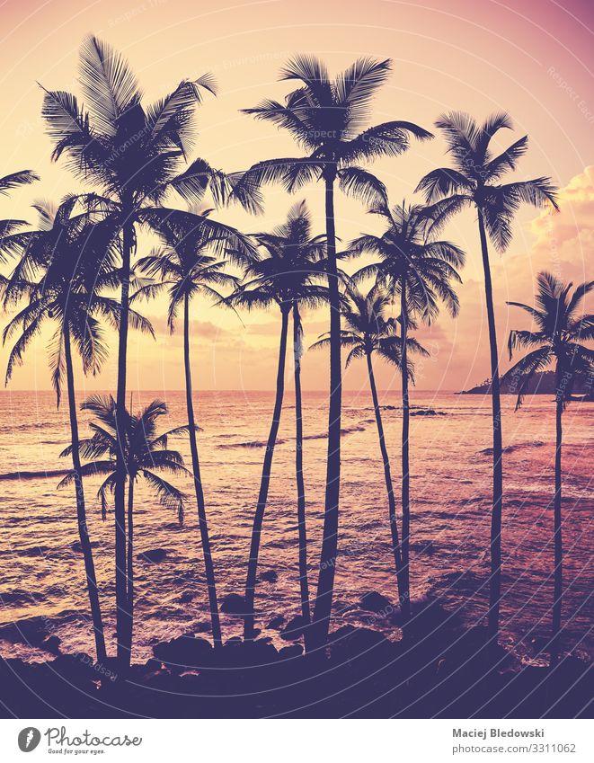 Kokospalmen Silhouetten bei Sonnenuntergang. schön Ferien & Urlaub & Reisen Sommerurlaub Strand Meer Insel Natur Horizont Baum exotisch Küste Idylle Sri Lanka