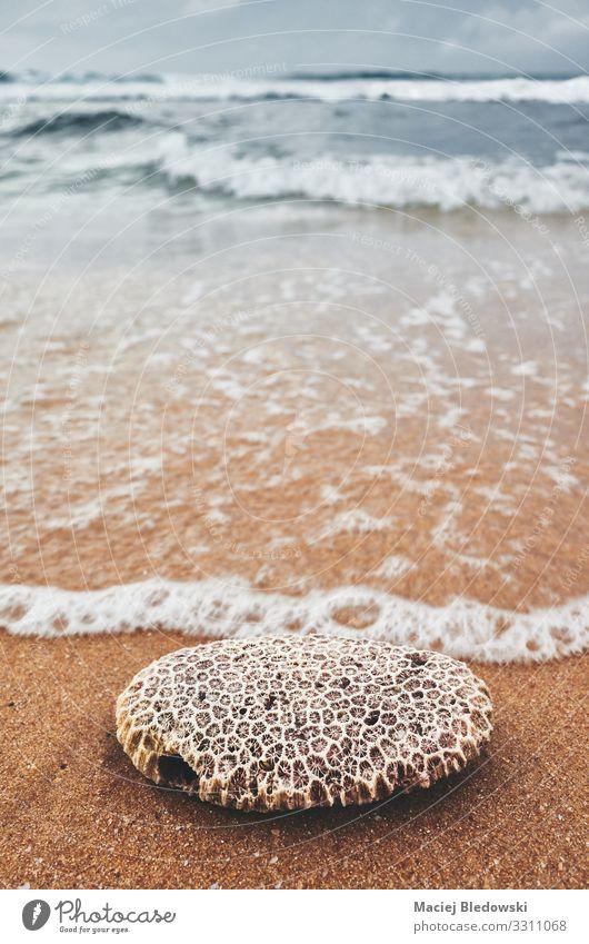 Nahaufnahme einer Koralle an einem Strand. Ferien & Urlaub & Reisen Sommer Meer Insel Wellen Natur Sand dunkel Korallen gefiltert Einfluss Wasser winken