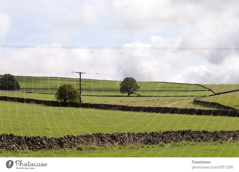 Allerlei Linien Himmel Ferien & Urlaub & Reisen Natur Pflanze blau grün weiß Landschaft Baum Wolken schwarz Umwelt natürlich Wiese Gefühle Gras