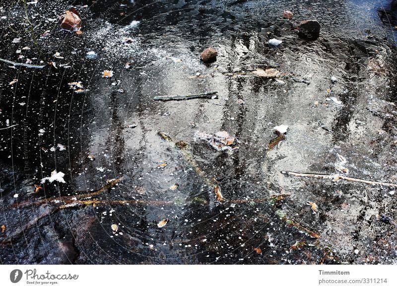 Eiszeit | Waldpfütze Umwelt Natur Urelemente Wasser Winter Frost glänzend kalt natürlich blau schwarz weiß Gefühle gefroren Farbfoto Außenaufnahme Menschenleer