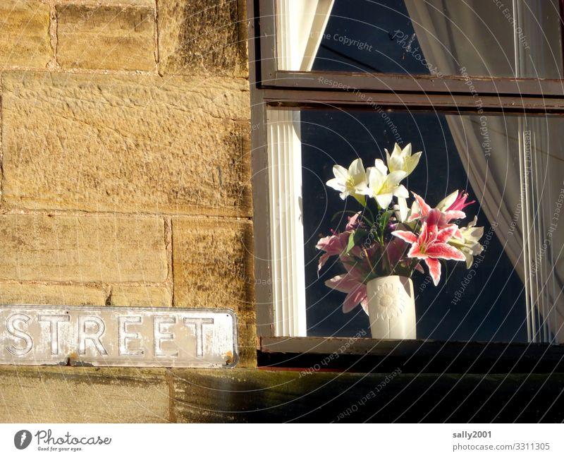 streetart... Blume Haus Fenster Straße Wand natürlich Mauer Fassade Häusliches Leben Wohnung Dekoration & Verzierung Schriftzeichen ästhetisch