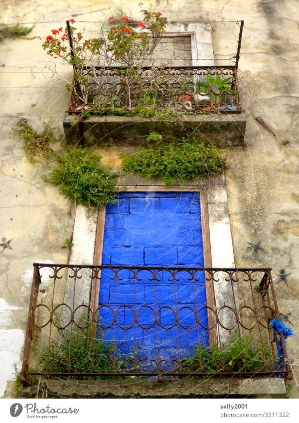 blau vermauert... Pflanze Blume Rose Portugal Haus Mauer Wand Fassade Balkon außergewöhnlich bizarr Einsamkeit Endzeitstimmung einzigartig Surrealismus Stadt
