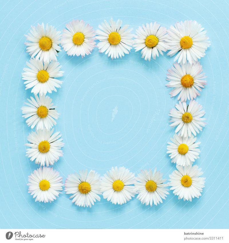 Rechteckiger Blumenrahmen auf hellblauem Hintergrund Design Dekoration & Verzierung Hochzeit Frau Erwachsene Mutter oben weiß Kreativität romantisch hell-blau