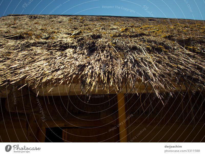 Überdacht Design Ausflug Sommer Traumhaus Umwelt Schönes Wetter Strohdach Strand Erlangen Bayern Deutschland Menschenleer Hütte Dach beobachten entdecken