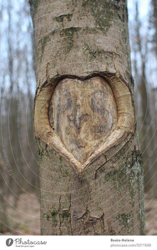 Auf immer vereint: Herz mit Initialen P+S in Baumrinde Liebe Rinde ritzen Außenaufnahme Natur braun Zeichen Baumstamm Verliebtheit Wald Ewigkeit