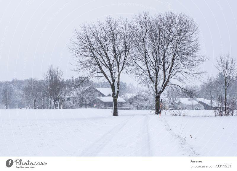 Begrüßungskomitee weiß Baum Einsamkeit ruhig Winter dunkel kalt natürlich Wege & Pfade Schnee Schneefall Feld Urelemente Landwirtschaft Sehnsucht Bauernhof