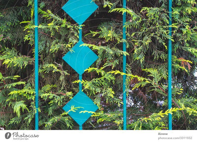 farblich unpassender Metallzaun vor Hecke Zaun Farbe grün türkis Rautenmuster Gitter gitterstäbe Kontrast Farbfoto Außenaufnahme Tag Menschenleer Barriere