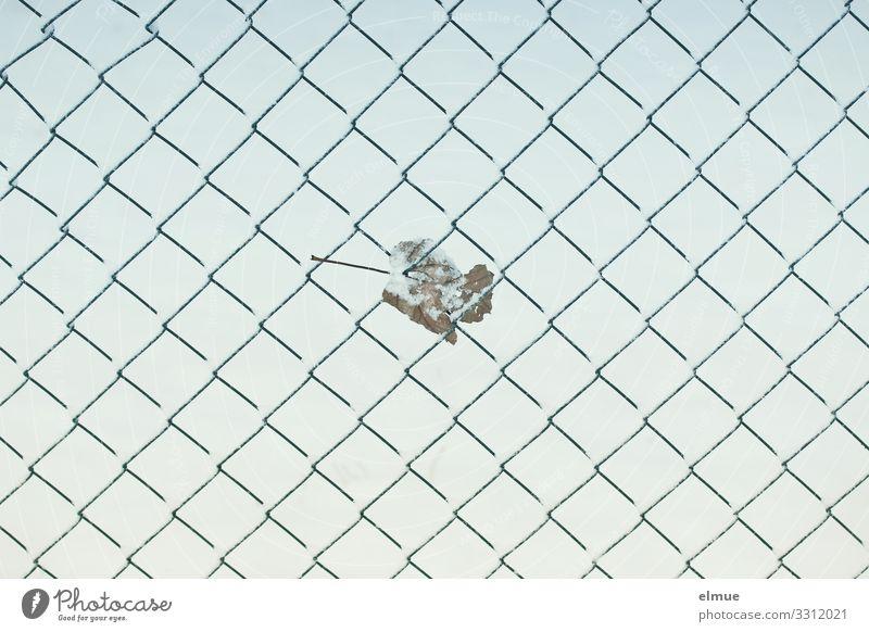 Maschendrahtzaun mit Blatt Winter lustig Design Metall Eis Kreativität Abenteuer Klima festhalten Frost Netzwerk Zaun Ende Verzweiflung Herbstlaub