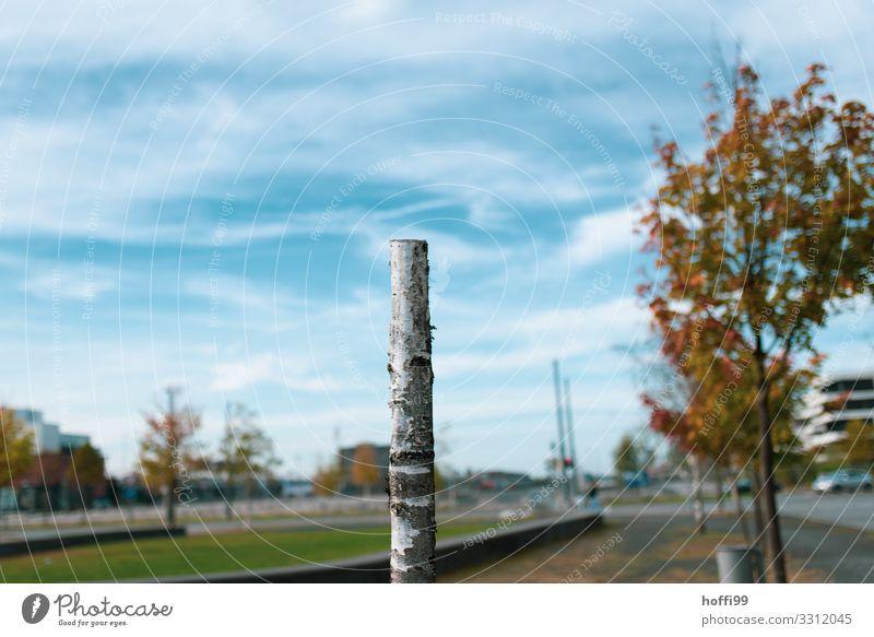 halbhoher Baumstumpf einer Birke im Stadtpark Himmel Wolken Schönes Wetter kaputt trist Traurigkeit Tod Verzweiflung Ärger Angst ästhetisch Natur protestieren