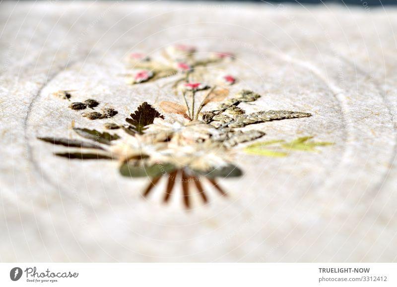 Blütenträume en miniature - gepresst auf handgeschöpftem Papier Design Freude Glück harmonisch ruhig Meditation Freizeit & Hobby Basteln Handarbeit Kunst