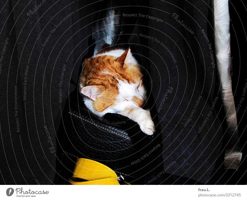 Kater im Schrank Häusliches Leben Schlafzimmer Mantel Tasche Tier Haustier Katze 1 schlafen Hauskatze Handtasche gemütlich träumen Geborgenheit Tierliebe
