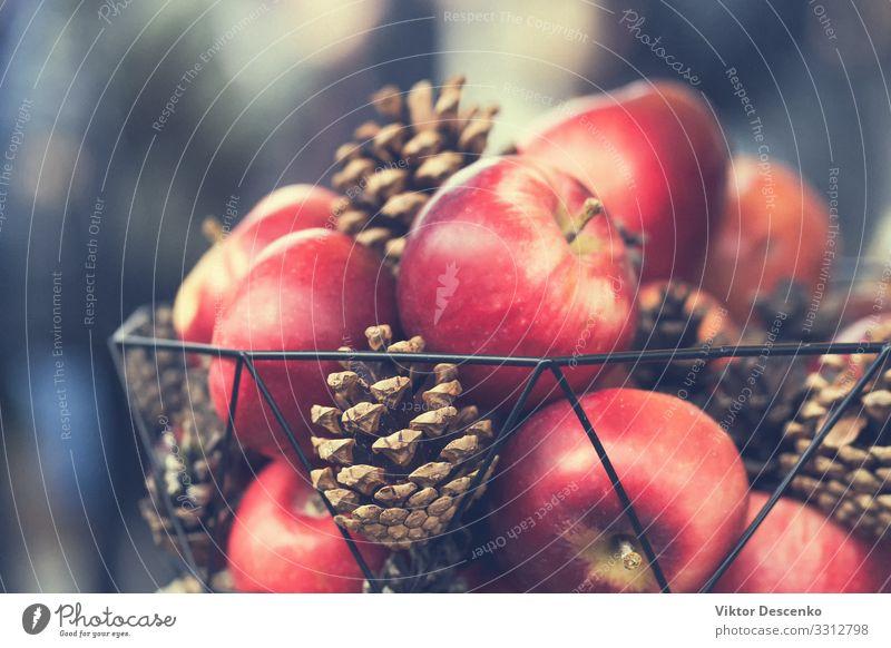 Natur grün rot Hand Baum Blume Blatt Winter schwarz Herbst natürlich Feste & Feiern Garten braun Frucht Design