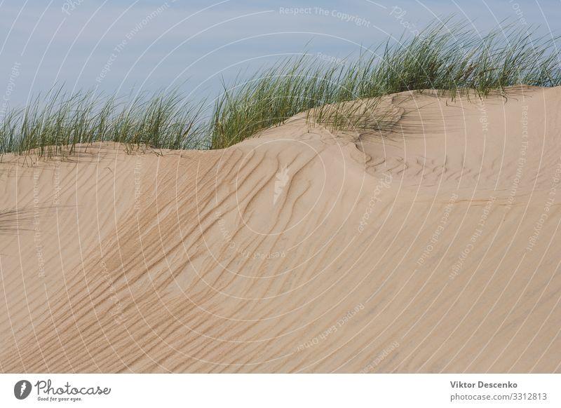 Himmel Ferien & Urlaub & Reisen Natur Sommer Pflanze blau schön grün Landschaft Baum Meer Strand Herbst gelb Umwelt natürlich