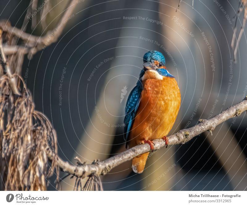 Im Blick des Eisvogels Umwelt Natur Tier Sonne Sonnenlicht Schönes Wetter Seeufer Flussufer Wildtier Vogel Tiergesicht Flügel Krallen Eisvögel Kopf Schnabel