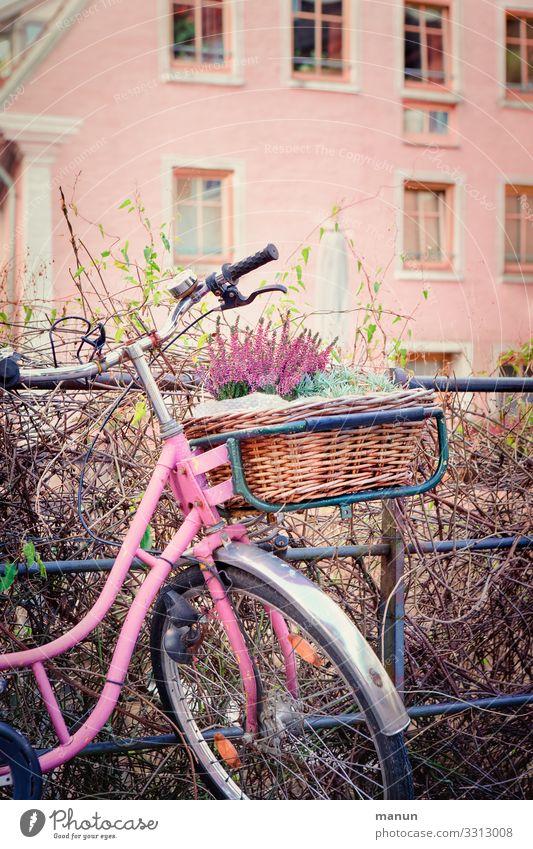 Hausrad Lifestyle Dekoration & Verzierung Gebäude Mauer Wand Fassade Verkehrsmittel Fahrradfahren Fahrradkorb Fröhlichkeit trendy nachhaltig rosa Freude