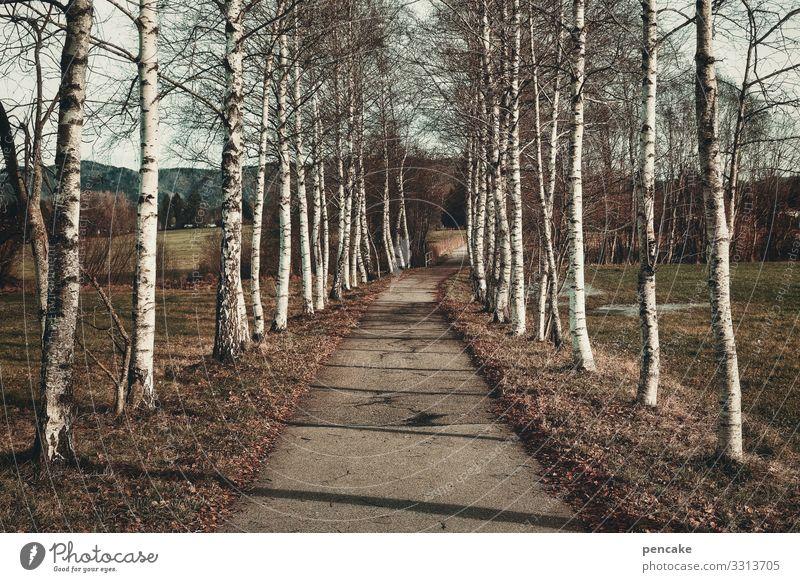 symmetrie | birkenallee Bäume Birken Allee symmetrisch Weg parallel Spazierweg Landschaft Natur Baum Wege & Pfade Zentralperspektive Umwelt ruhig Park