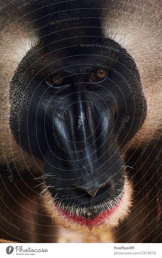 Natur alt Tier Einsamkeit Gesicht lustig Denken Wildtier Schutz Lebewesen Verstand Afrika Säugetier Zoo ökologisch klug