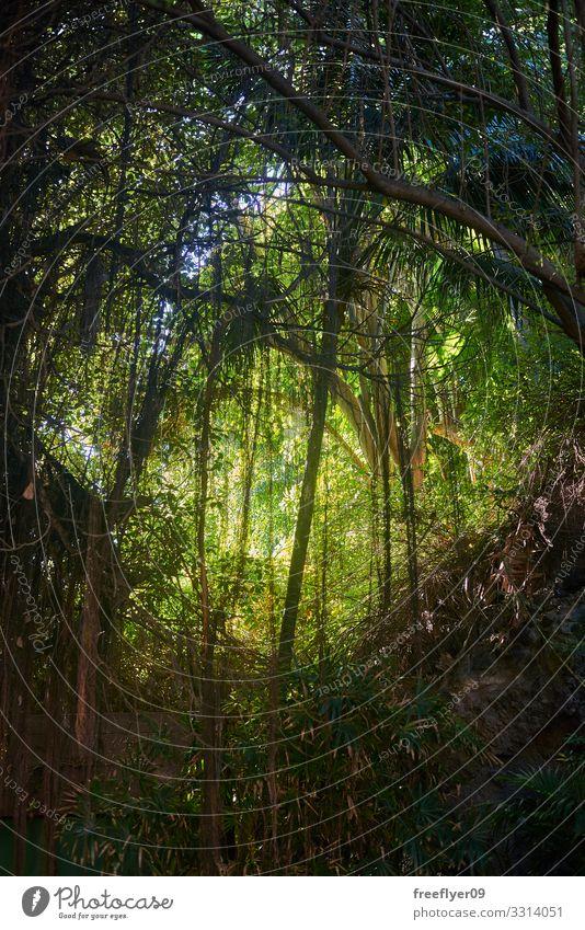 Ferien & Urlaub & Reisen Natur Pflanze schön grün Landschaft Baum Blatt Wald Ferne Berge u. Gebirge Umwelt natürlich Tourismus Freiheit Ausflug