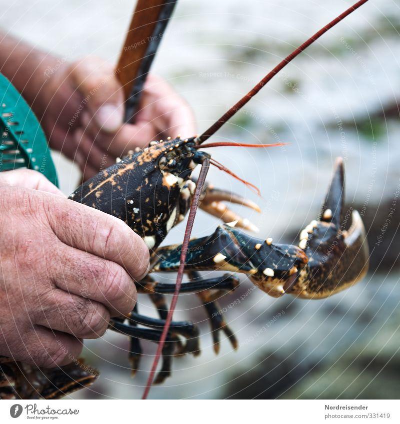 Hummer Lebensmittel Meeresfrüchte Bioprodukte Freizeit & Hobby Angeln maskulin Hand Finger Tier fangen bedrohlich bizarr Fischereiwirtschaft Anglerglück