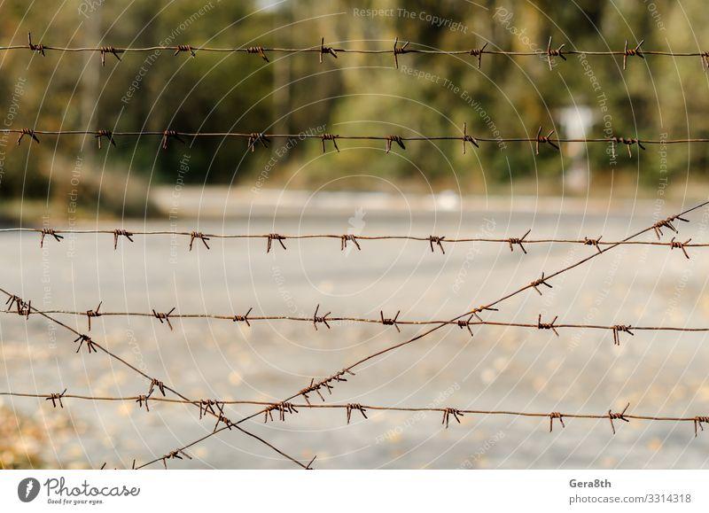 Stacheldrahtzaun in Tschernobyl Ukraine Ferien & Urlaub & Reisen Tourismus Ausflug Pflanze Herbst Baum Straße bedrohlich grau grün gefährlich