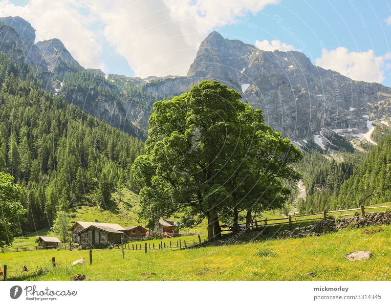 Sommerlicher Baum im Tal Ferien & Urlaub & Reisen Natur Landschaft Sonne Erholung Wolken ruhig Wald Berge u. Gebirge Gesundheit Leben Umwelt Frühling Wiese