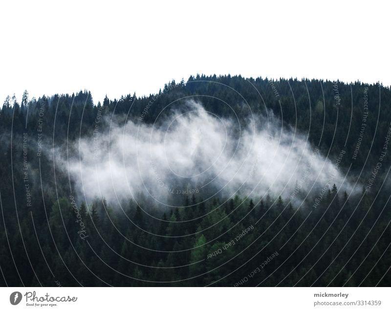 Nebel in den Wäldern Sinnesorgane Erholung ruhig Ausflug Ferne Freiheit Sommerurlaub Berge u. Gebirge wandern Umwelt Natur Landschaft Luft Wald Hügel Alpen