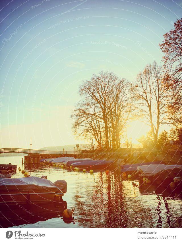 Überlingen Ferien & Urlaub & Reisen Ausflug Umwelt Natur Landschaft Pflanze Tier Urelemente Wasser Himmel Horizont Herbst Klima Wetter Schönes Wetter Baum